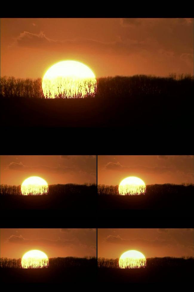 图片名称:高清黄昏落日树木led