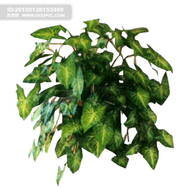 室内植物全1-室内设计-其他